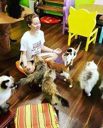 Try cat yoga at Dubai's Ailuromania Café
