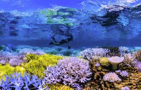 Connect With Nature: Chasing Coral