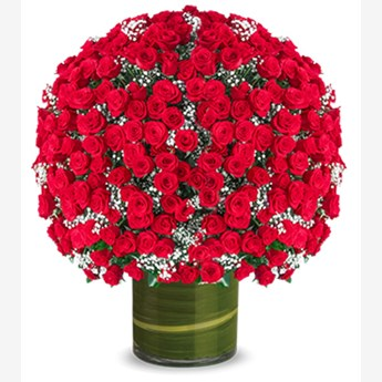 Launching Premium 500 Red Roses Bouquet